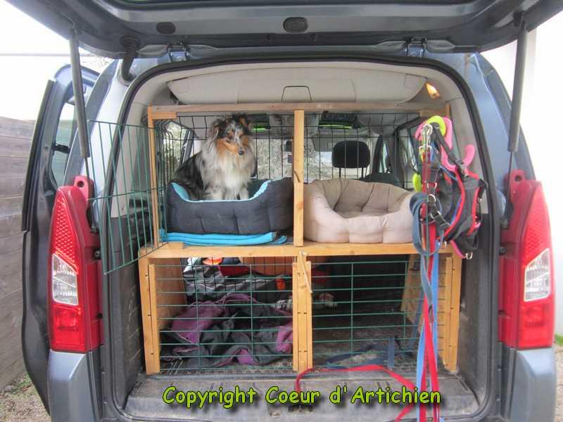 Coeur d 39 artichien m diation animale 44 zootherapie cazoo am nager sa voiture pour la m diation - Grille pour chien en voiture ...